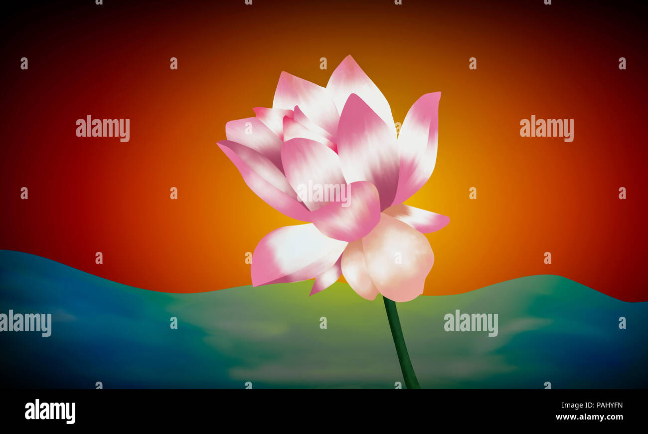 Water Lily illustration colorée ,peinture Photo Stock