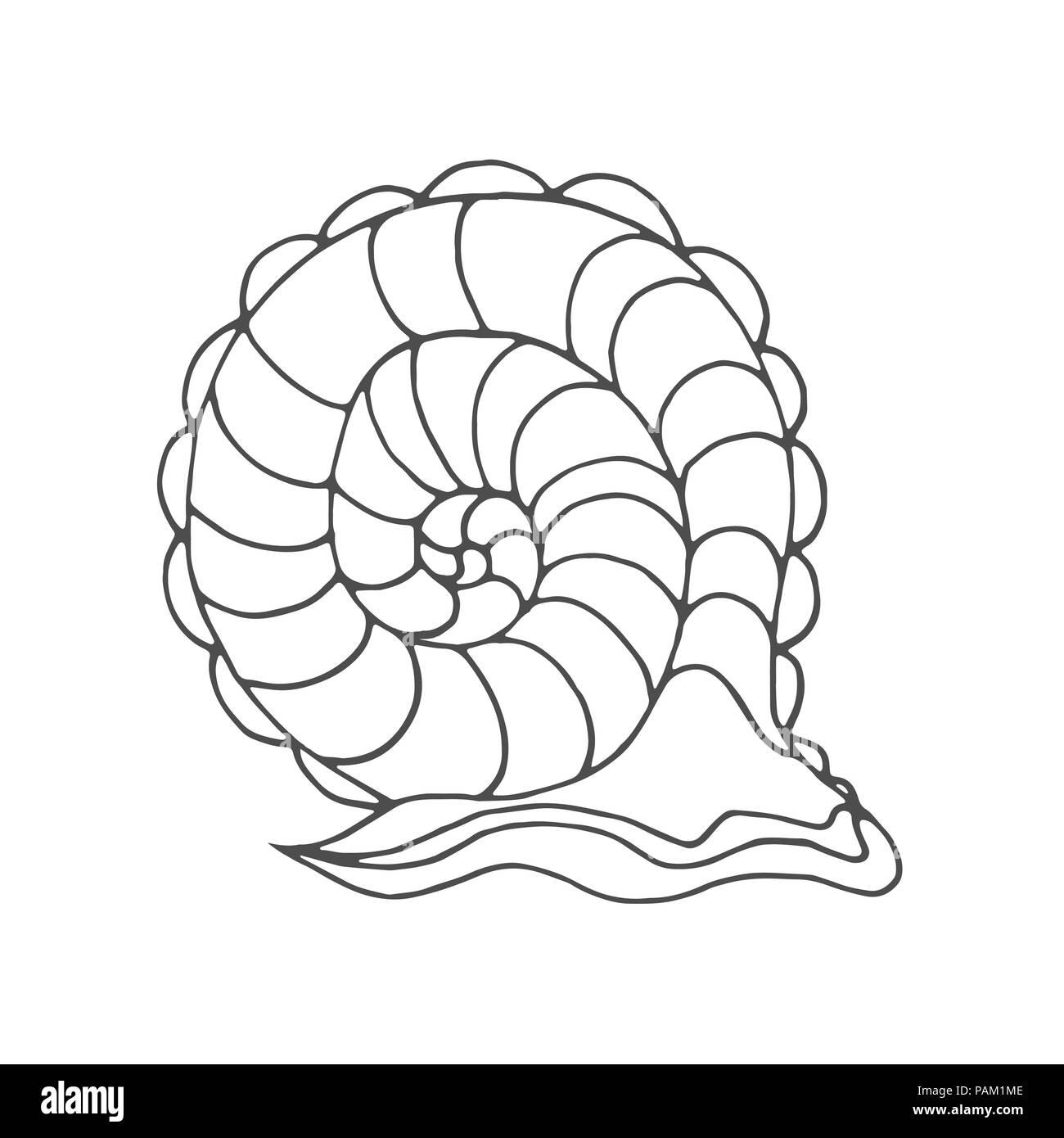 Coloriage Adulte Personnage.Escargot A Colorier Pour Les Enfants Et Les Adultes Modele Isole