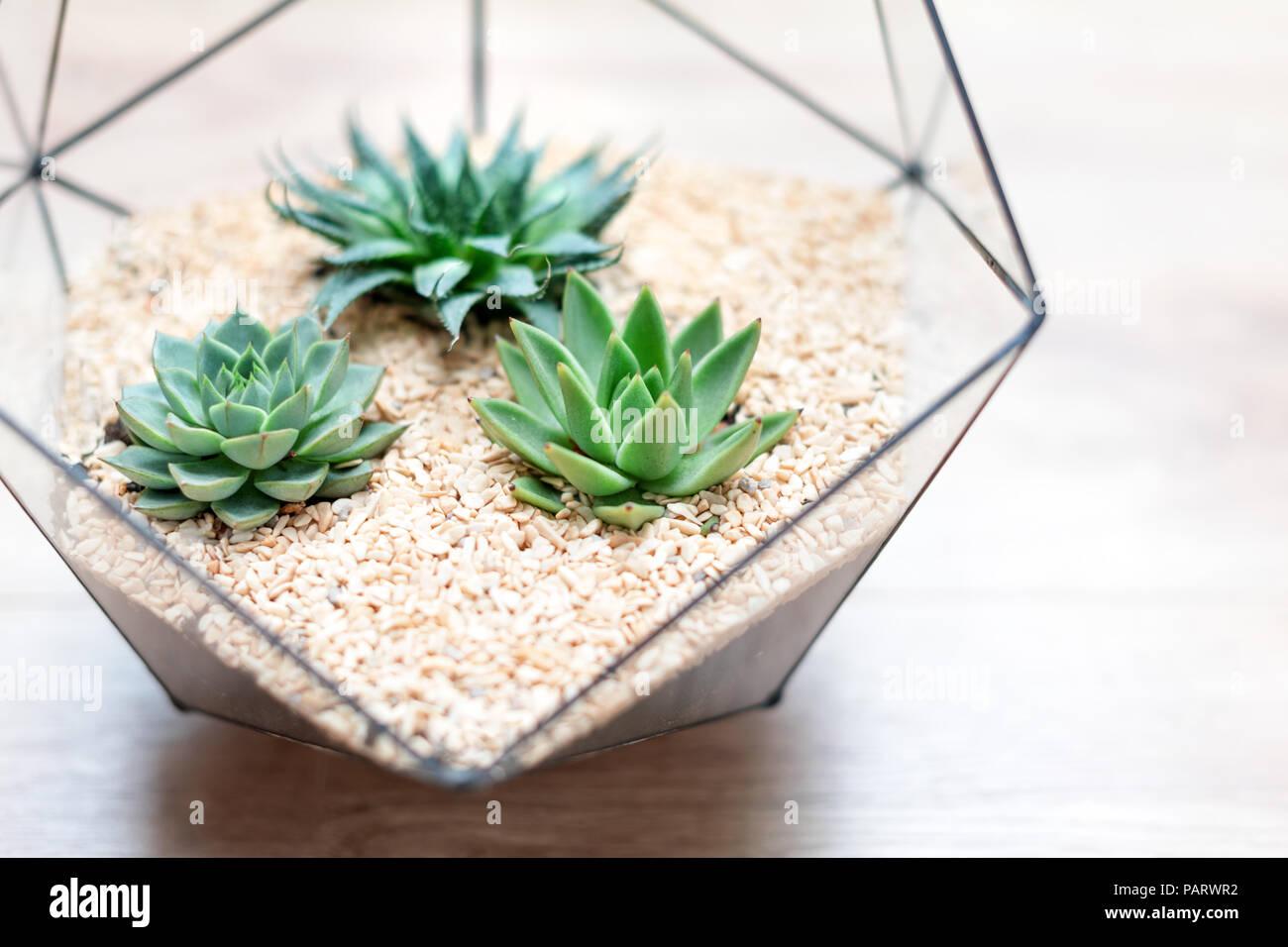 Vase En Verre Florarium Avec Les Plantes Succulentes Et Les Petits