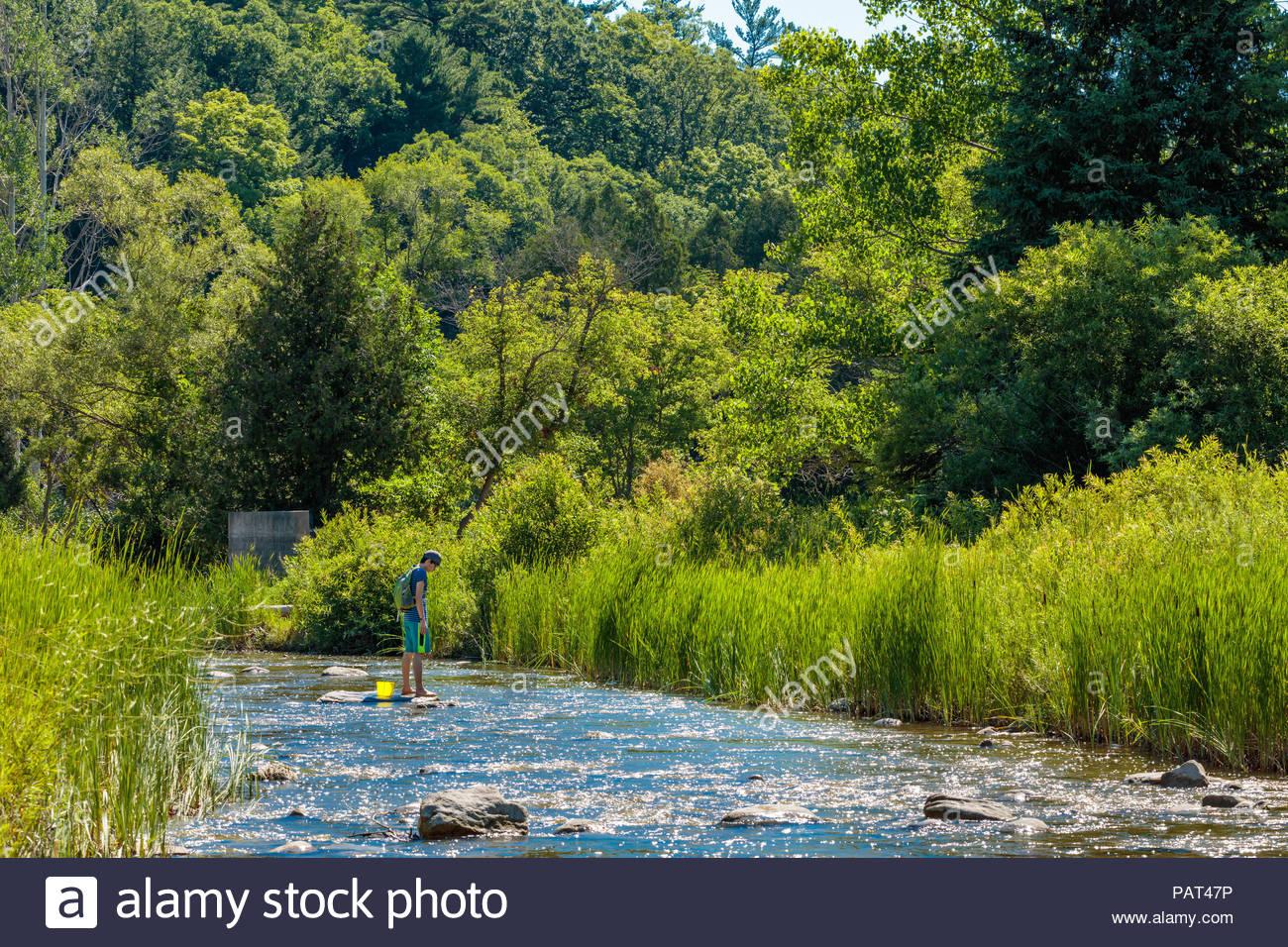 Baignade forêt shinrin-yoku et l'étude de la nature en un peu Rouge Creek dans le parc urbain national de la Rouge Toronto Ontario Canada Photo Stock