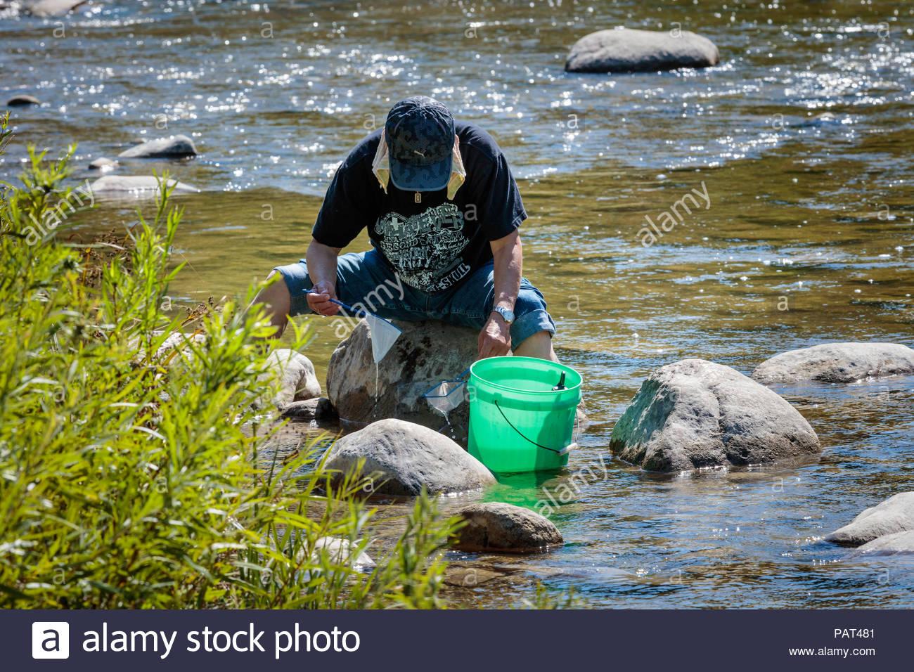 L'étude de la nature en limnologie dans peu de Rouge Creek dans un parc urbain national de la Rouge désert urbain à l'intérieur de Toronto Ontario Canada Photo Stock