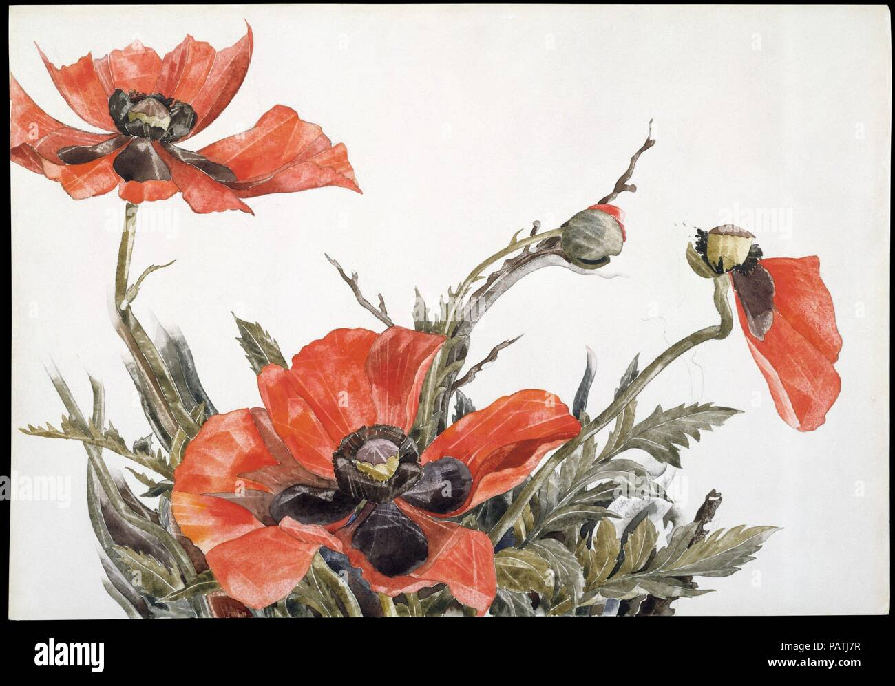 788f99b958 Coquelicots rouges. Artiste : Charles Demuth (American, Lancaster,  Pennsylvanie 1883-1935 Lancaster, Pennsylvanie).