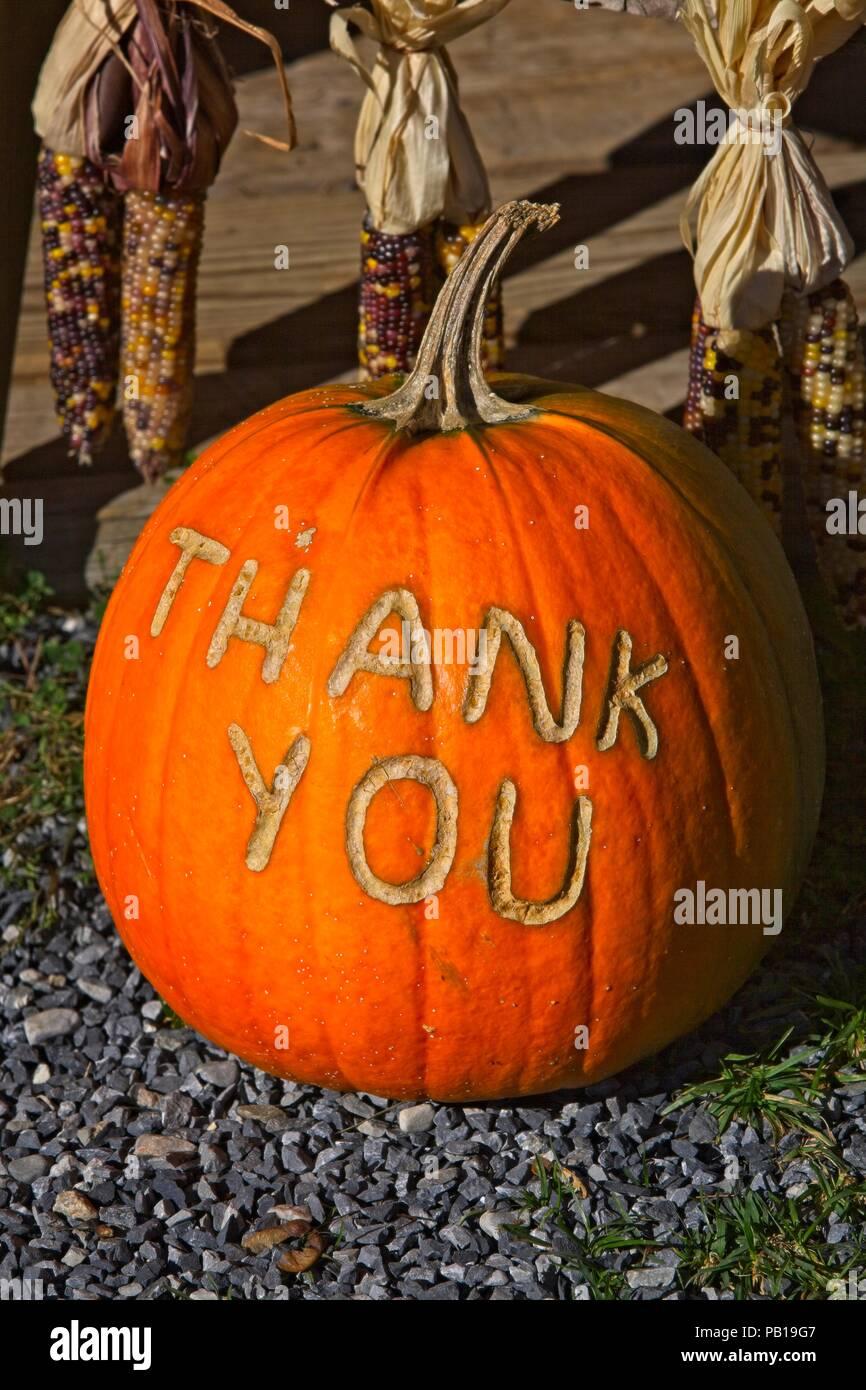 Message écrit sur une citrouille à un farmstand dans le Vermont en début d'octobre Photo Stock