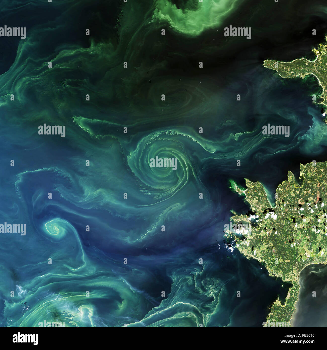 Image satellite de la NASA de floraison du phytoplancton dans la mer de Barents, Golfe de Finlande, 2018 Banque D'Images