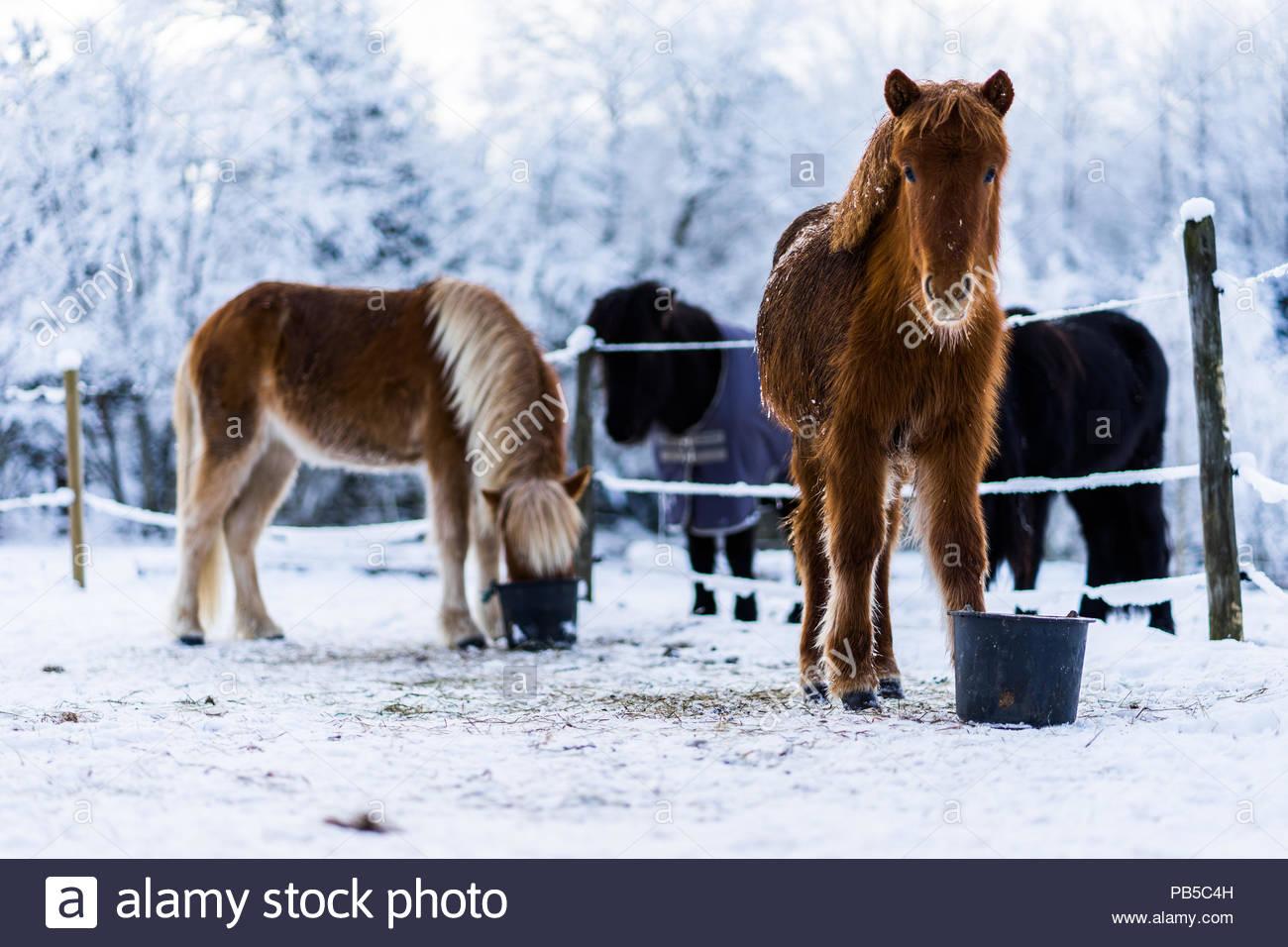 Icelandric pendant l hiver froid de glace Banque D Images, Photo ... c23d38a7680