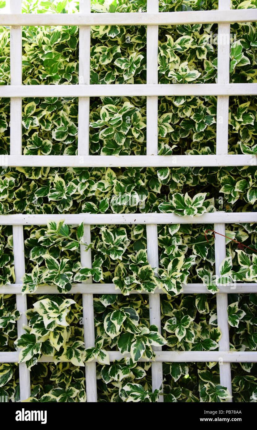 Petite Cloture De Jardin Blanche clôture en treillis photos & clôture en treillis images - alamy