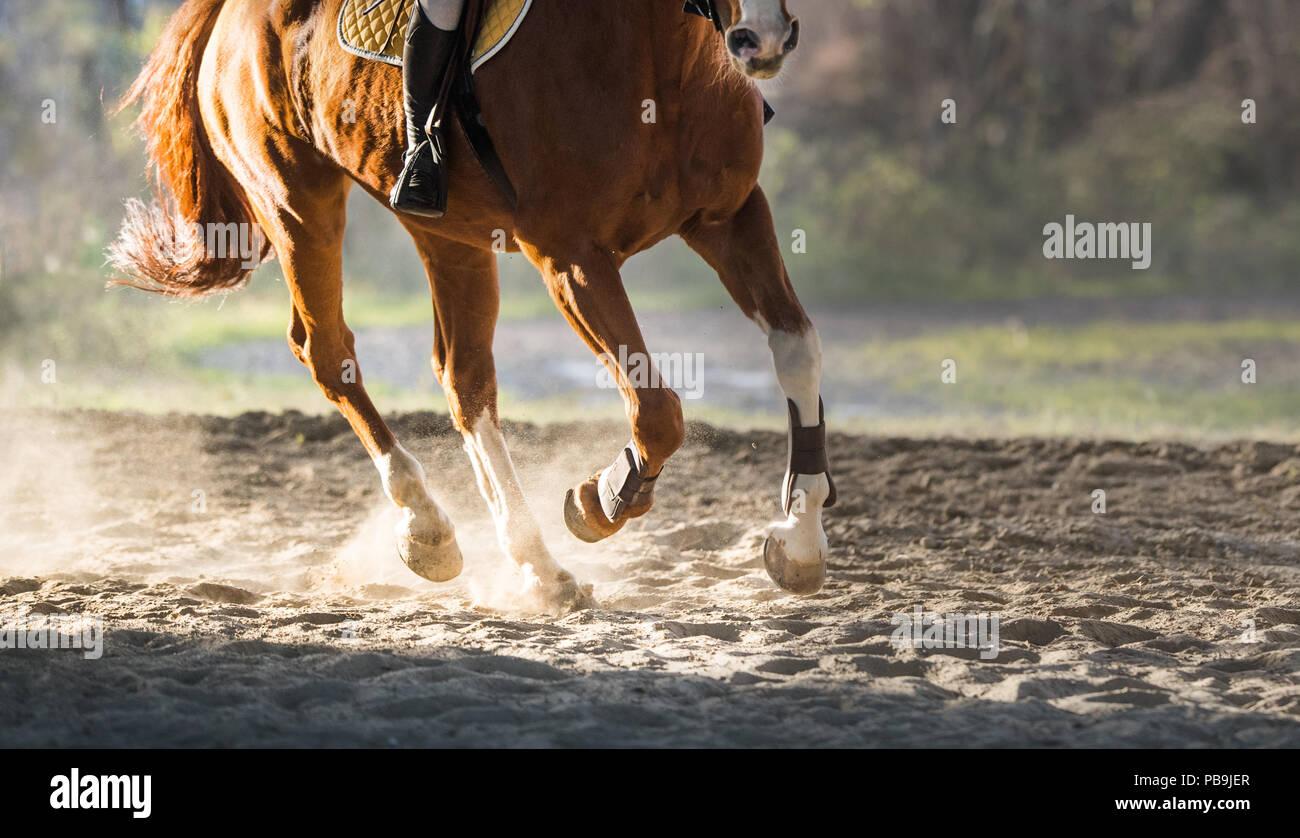 A l'équitation à l'automne Photo Stock