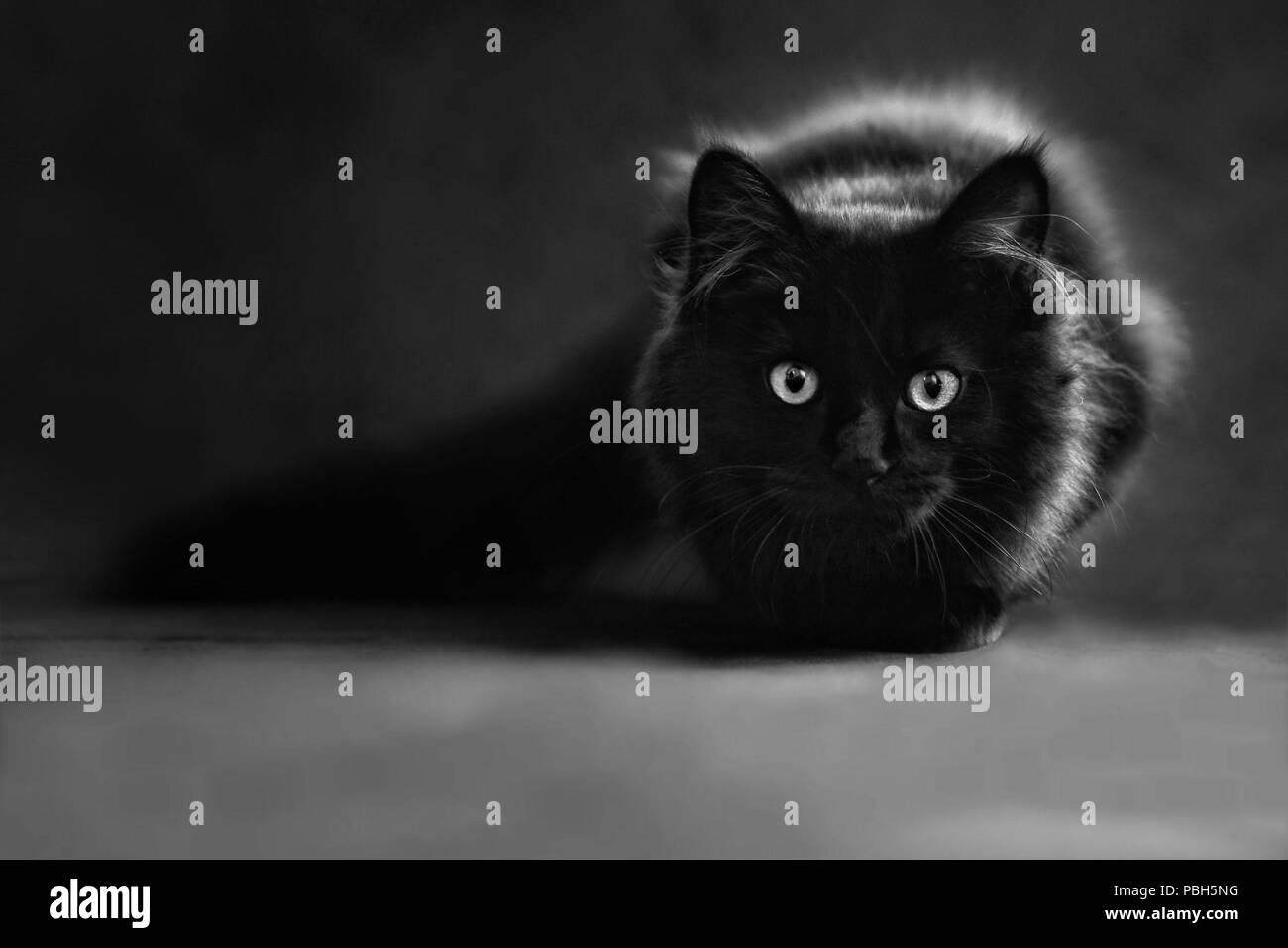 BBM noir chatte