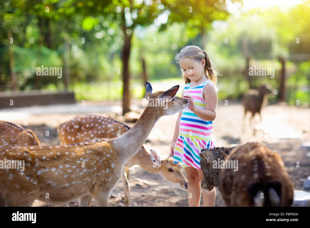 L'alimentation de l'enfant les cerfs sauvages au zoo pour ...