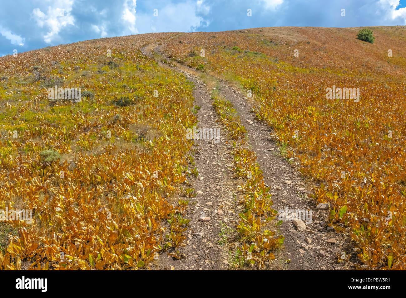 Feuillage jaune onn deux côtés de off road trail Photo Stock