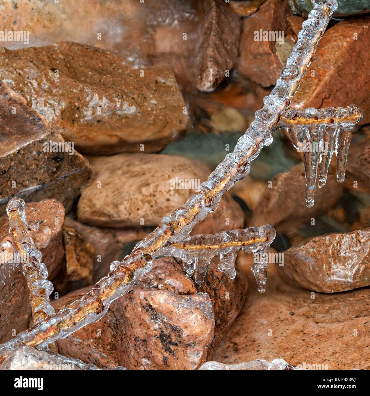 Gros plan du côté de ruisseau twig incrustés de glace d'eau gelés en hiver, revêtement émail UK Banque D'Images