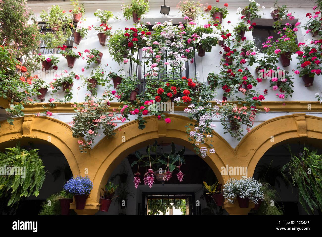 Les couleurs de l'image de fleurs au Festival des patios, Cordoue, Andalousie, Espagne, Europe Photo Stock