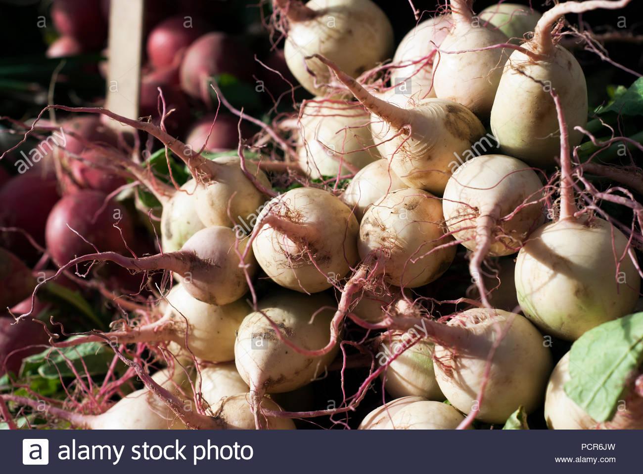 Navets fraîchement récolté s'asseoir sur l'affichage à un marché agricole. Photo Stock