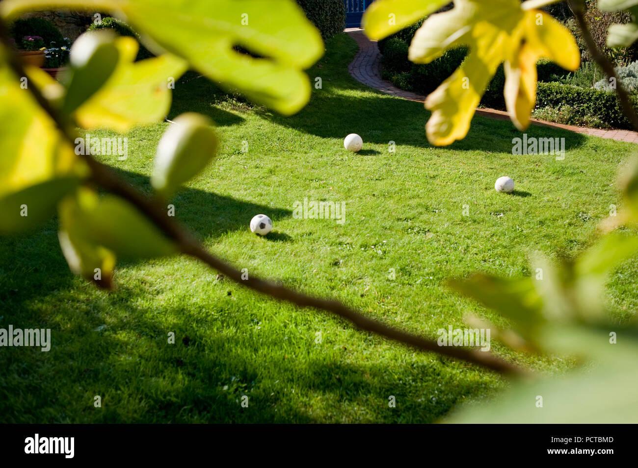 Pré, ballons, fig tree Banque D'Images