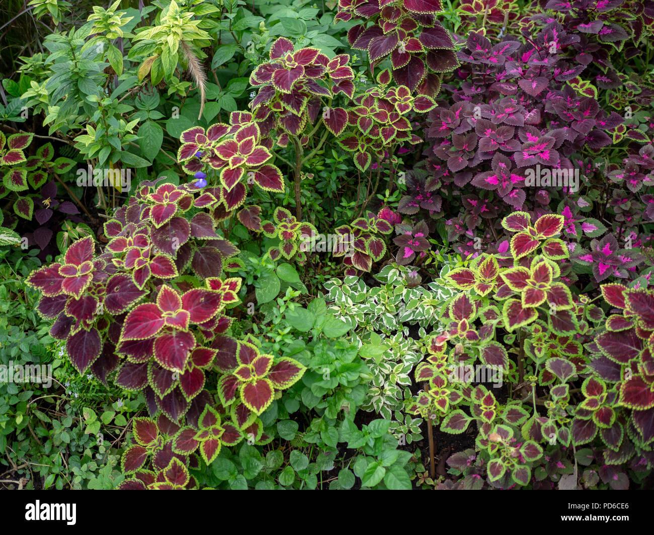 https www alamyimages fr petite jungle vivant a l exterieur evergreen tropical jardin avec plantes fleurs racines decoration de jardin foret tropicale image214656462 html