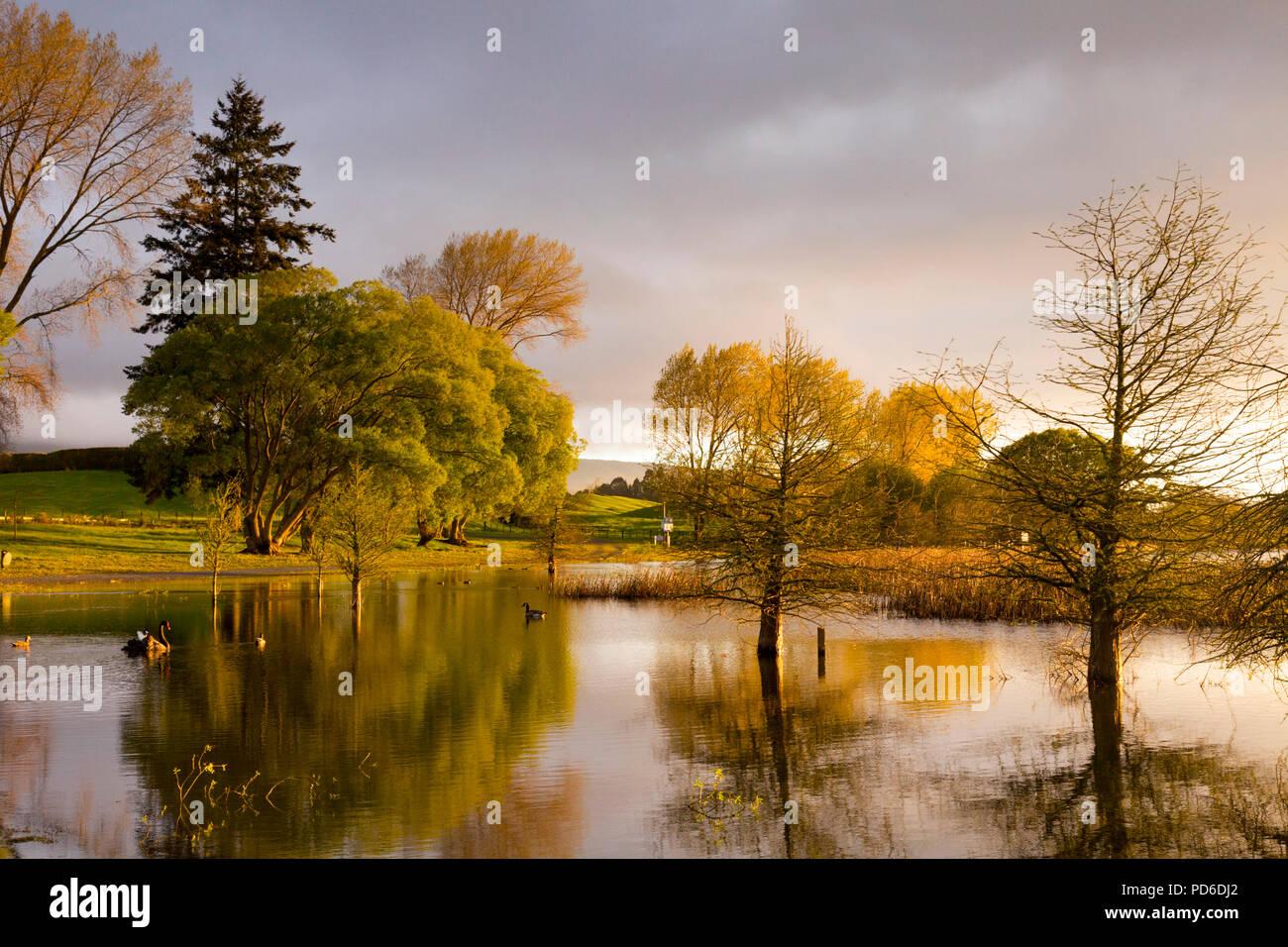 Guy Re Réserver, lac Rerewhakaaitu, Rotorua, Nouvelle-Zélande, dans la belle lumière du matin. Photo Stock