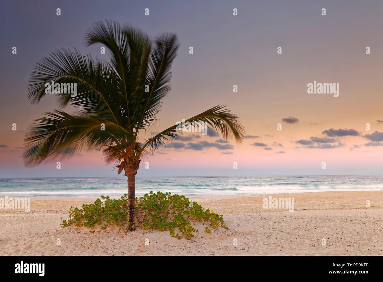 Crépuscule sur la plage de sable fin avec palmiers, Playa Bavaro, Punta Cana, République Dominicaine Photo Stock