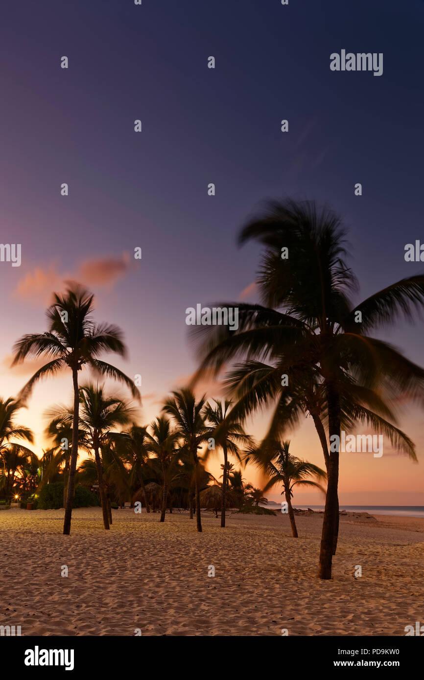 Coucher du soleil sur la plage avec des palmiers, Playa Bavaro, Punta Cana, République Dominicaine Photo Stock