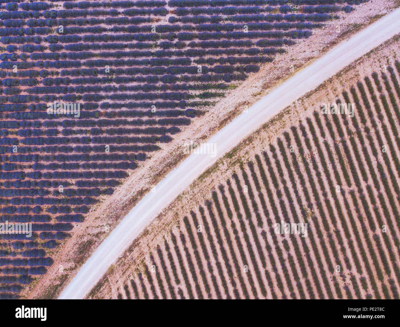 La géométrie de l'antenne vue supérieure du paysage, route entre champs de lavande, la photographie de drones Banque D'Images