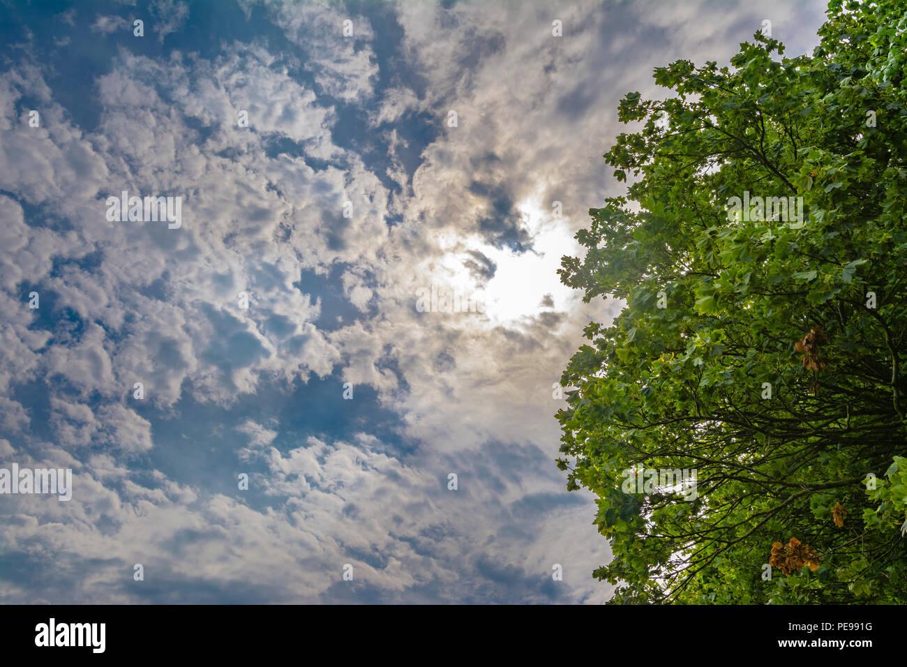 Scène à contraste élevé de ciel bleu avec le soleil essayant de briller à travers les nuages blancs, par un arbre vert, en été dans le Royaume-Uni. Banque D'Images