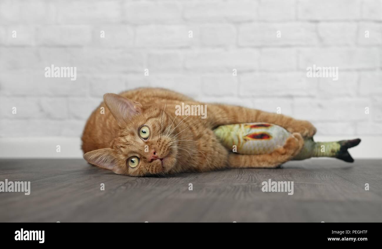 Cute cat gingembre couché et serrant un poisson jouet. Banque D'Images