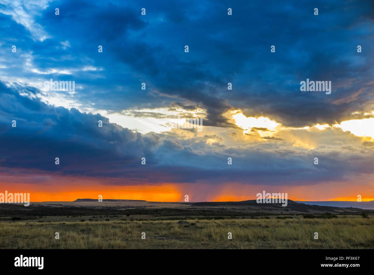 Paysage panoramique vue: gris dramatique nuages de tempête de recueillir plus d'un horizon d'orange dans la savane avec pluie imminente au coucher du soleil, Masai Mara, Kenya Banque D'Images