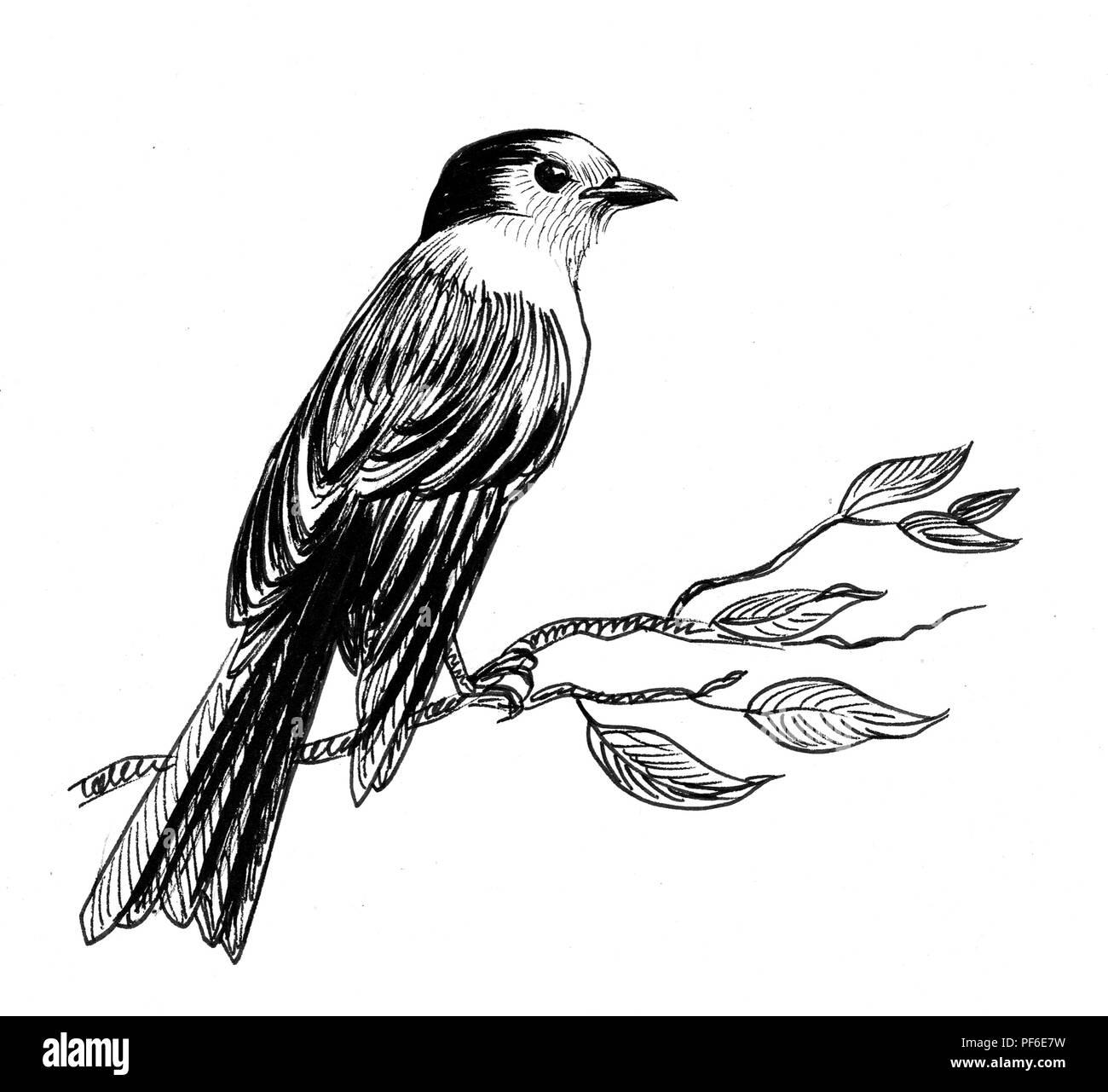 Dessin Noir Et Blanc Dencre Dun Oiseau Posé Sur Une