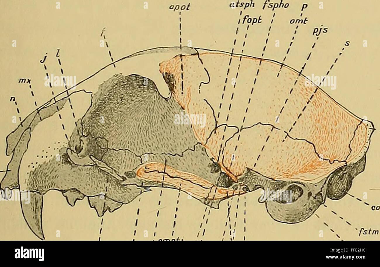 Foramen Ovale Photos & Foramen Ovale Images - Alamy