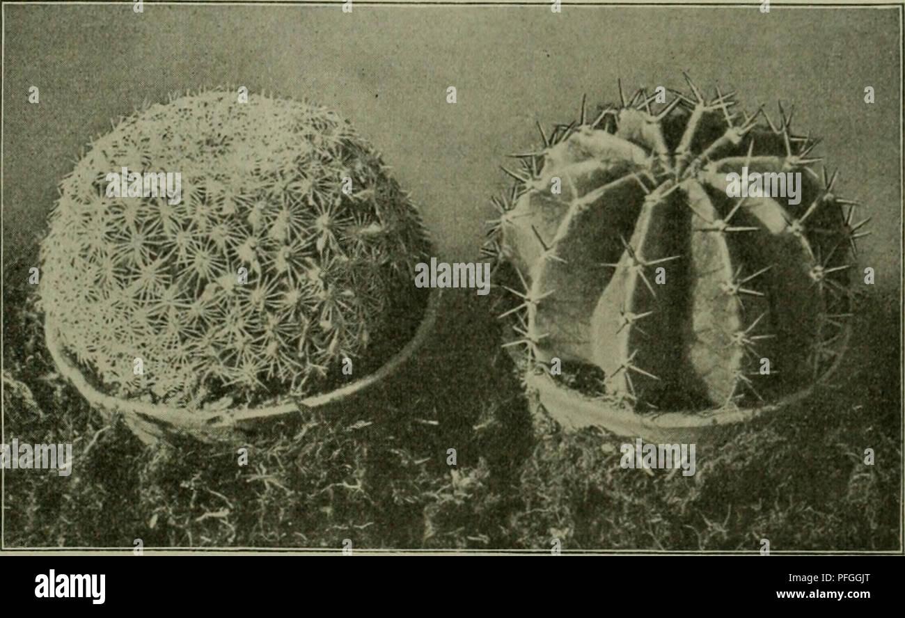 Das Leben Der Pflanze. Les Plantes ; Plantes ; Plantes ; Phytogéographie. ^  .