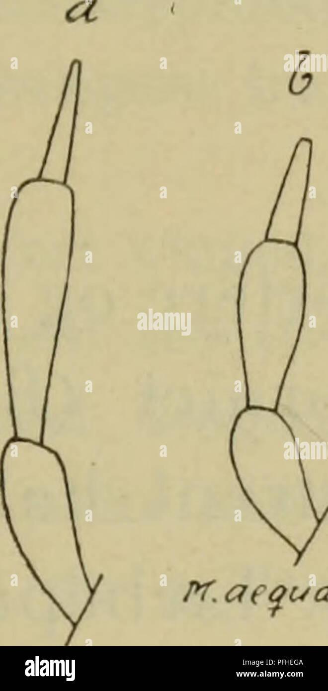 . Illustrerede haandbøger la faune; den danske plus dyreverden... Fin 167 naestsidste conduit og ikke eller kun lidt tyndere sådanne fin (fig. 69, e et f) 4. 3. Kaebepalpernes endeled tyndt de ikke, -- und. Veuillez noter que ces images sont extraites de la page numérisée des images qui peuvent avoir été retouchées numériquement pour plus de lisibilité - coloration et l'aspect de ces illustrations ne peut pas parfaitement ressembler à l'œuvre originale.. Dansk Forening naturhistorisk. København, G. E. C. Gad Photo Stock