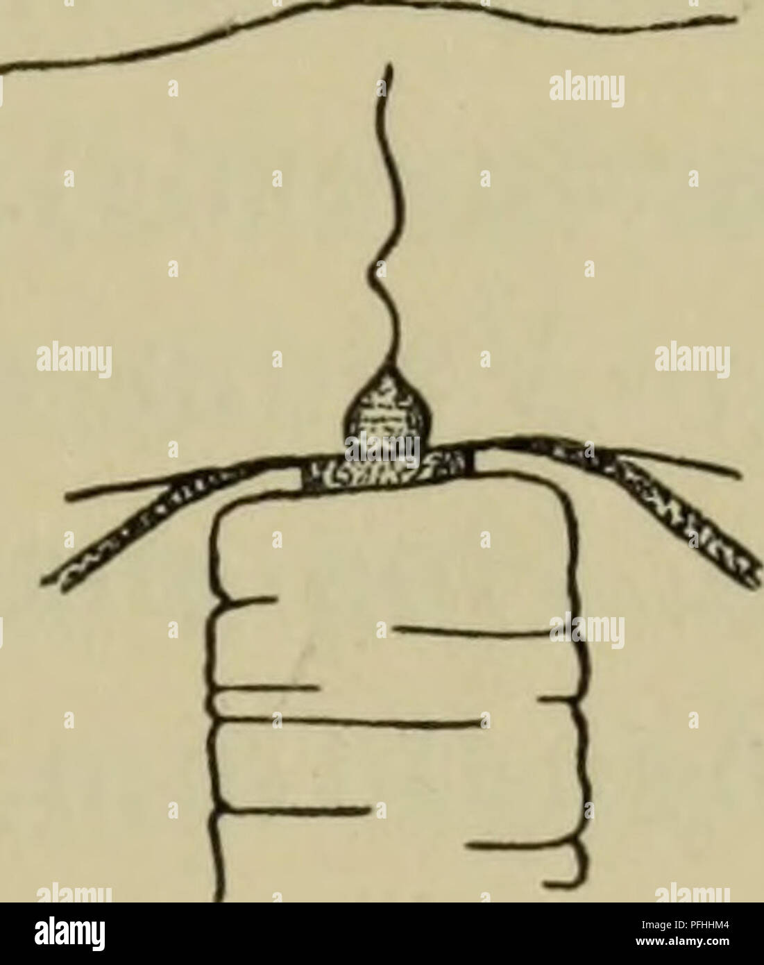. Illustrerede haandbøger la faune; den danske plus dyreverden... . 19 isaer Margeliderne cyster (HOS). Hyppigst flaskeformet er Maven, af de forskellig Sidevaegge taille; je dens à Gonaderne (som hos enkelte pour straekke- mer kan sig et kort Stykke ud langs Radiaerkanalerne). Gonaderne kan danne en anneau sluttet runt Manubrium eller ved lodrette Stri- ber være delt i 4 8 adradiale interradiale eller Dele (sjaeldnere er der 5 eller et andet Antal Gonader). Undertiden faestet er ikke Maven direkte til sous-ombrelle, les hommes jusqu'en udgaaende gelatinøs fra dennes Midte Udvaext, der kaldes Ma Banque D'Images