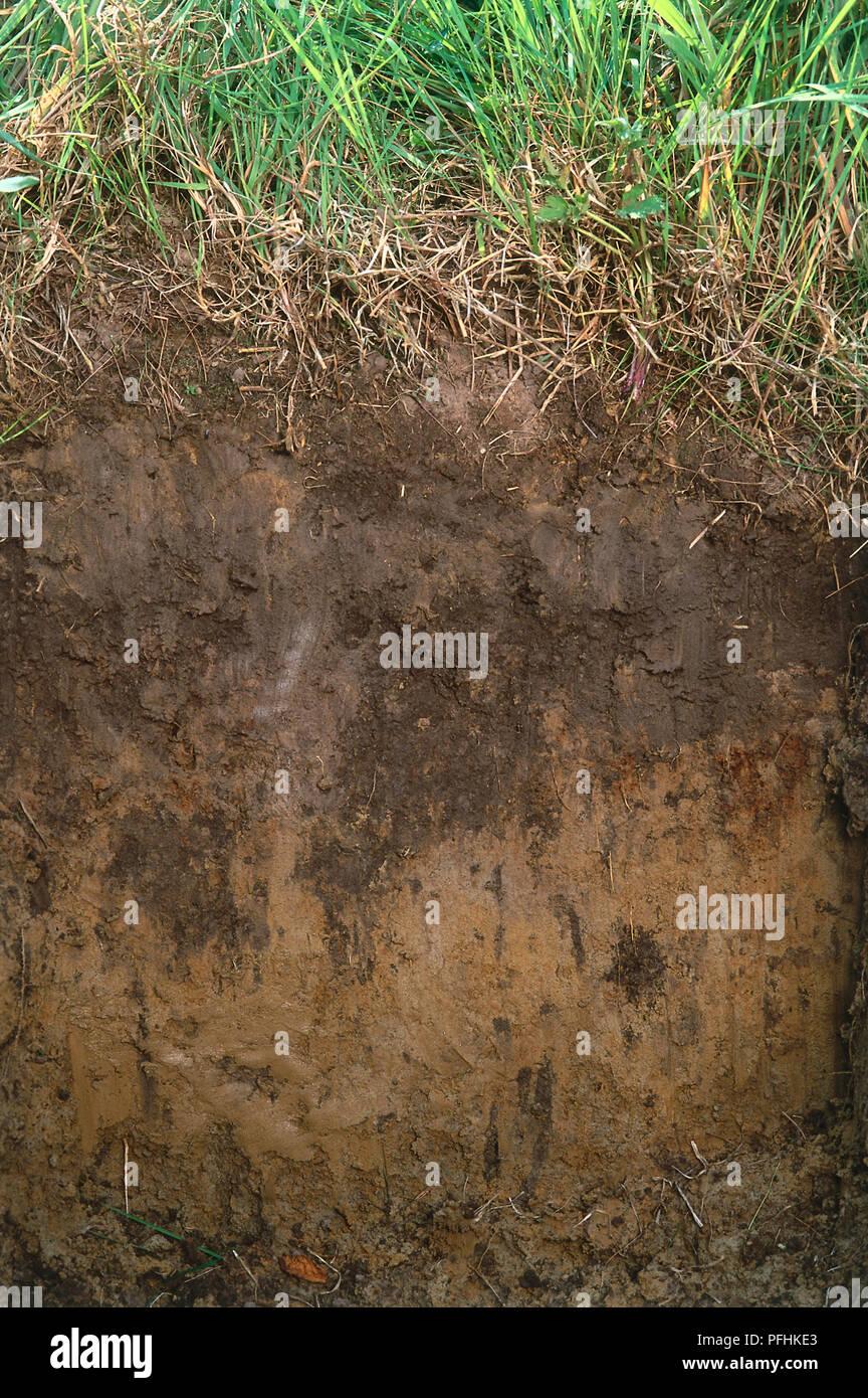 Sol sableux, vue en coupe Photo Stock - Alamy