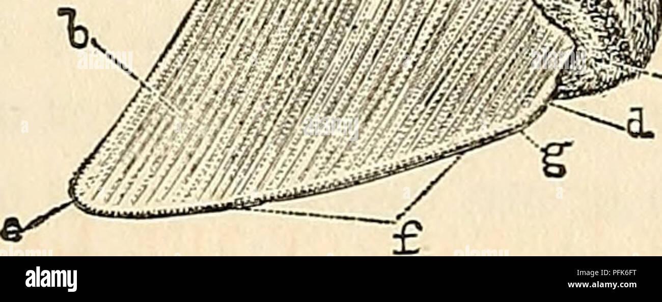 bande de caoutchouc datant théorie Vitesse uvic datant