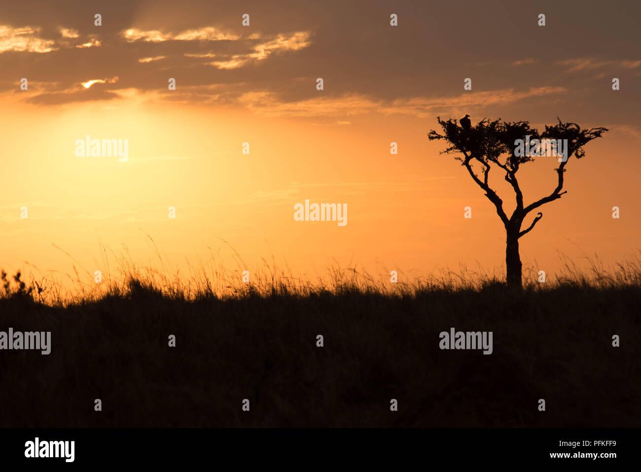 Le Masai Mara, Kenya, Safari Photo Stock
