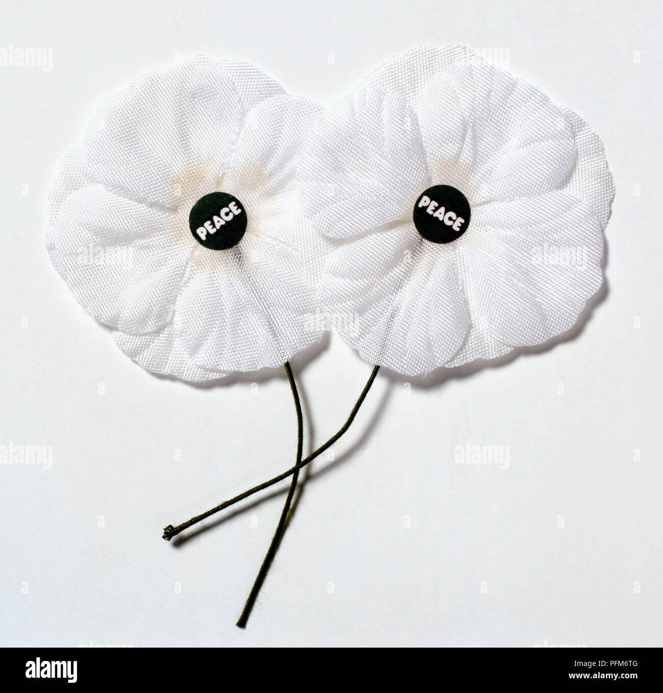 """Coquelicots blancs avec autocollant """"paix"""" au centre, symbole de la Peace Pledge Union Photo Stock"""