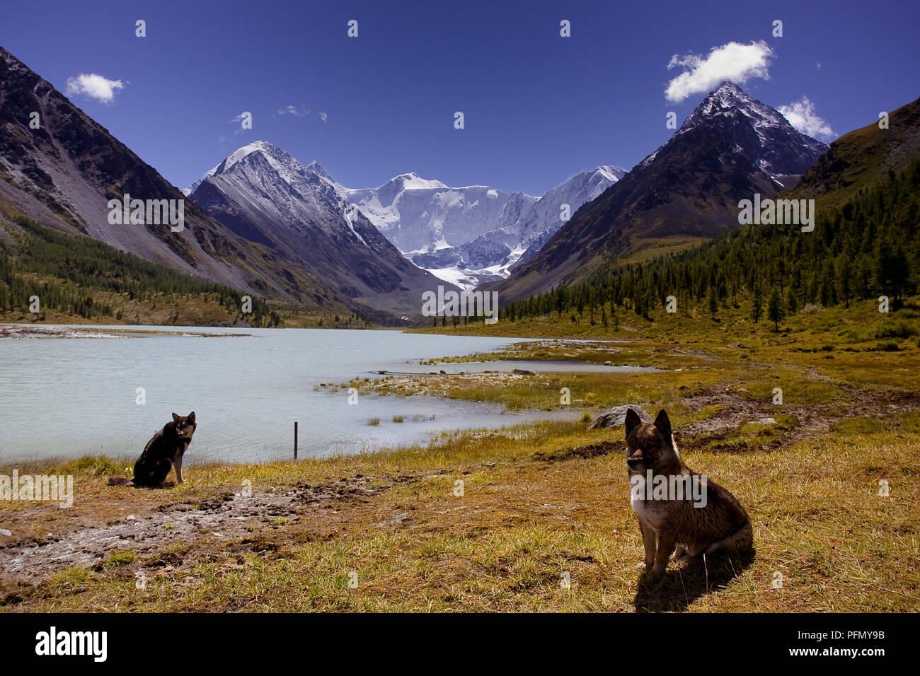 Les chiens à la recherche dans l'appareil photo sur le lac entouré par une forêt et de magnifiques montagnes recouvertes de neige Banque D'Images