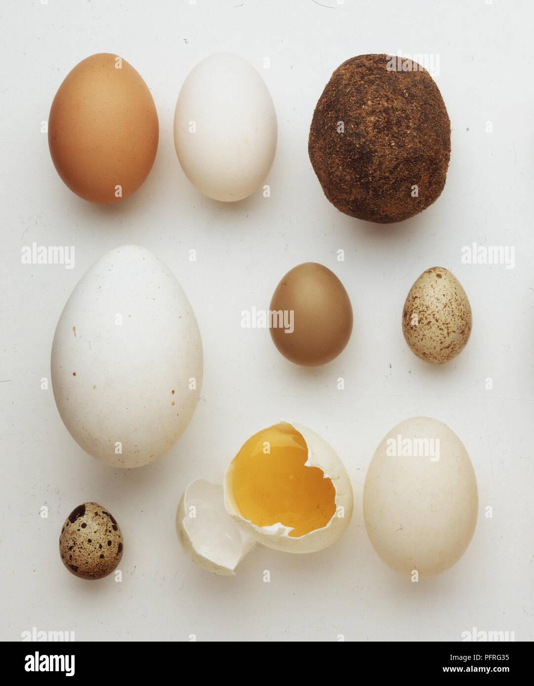 Oeuf de caille et 1 000 ans, des oeufs oeufs de canard conservé dans de la chaux, de cendre et de pin sel pour 100 jours Banque D'Images