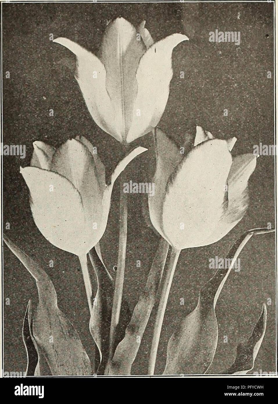 Coloriage Fleurs Bulbe.La Chalp Bulbes Et Plantes Automne 1916 Les Catalogues De Graines