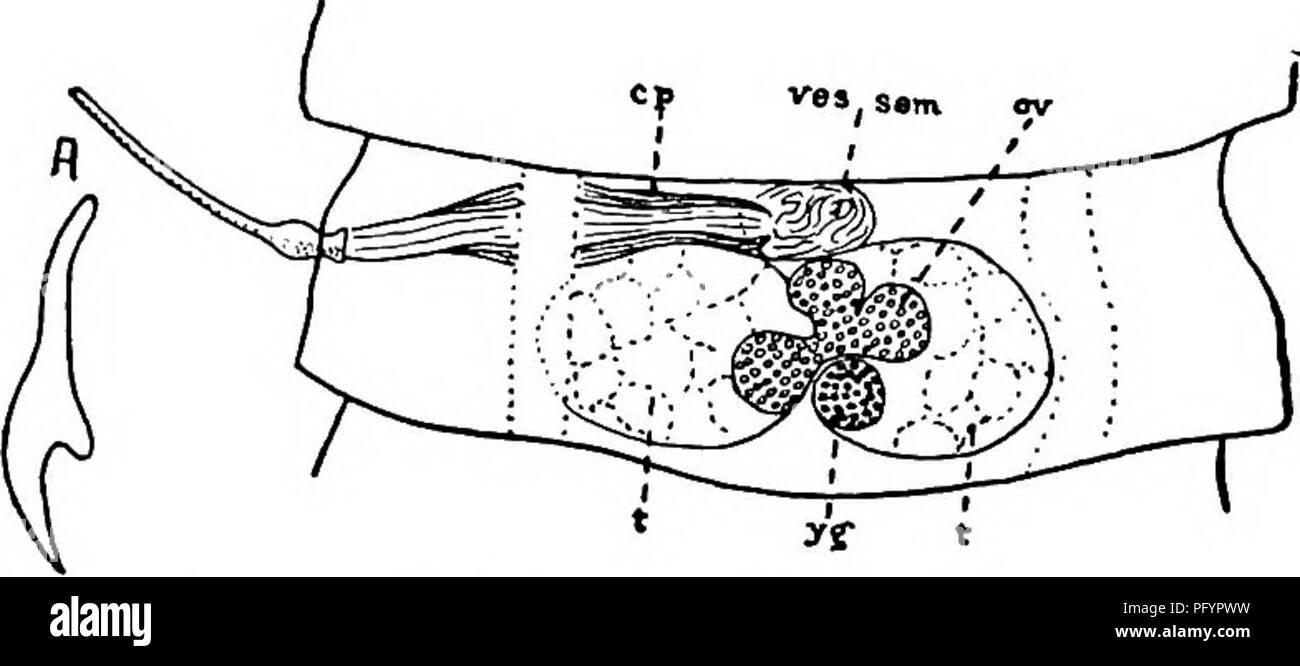 La biologie d'eau douce. Biologie des eaux douces. Vers ...