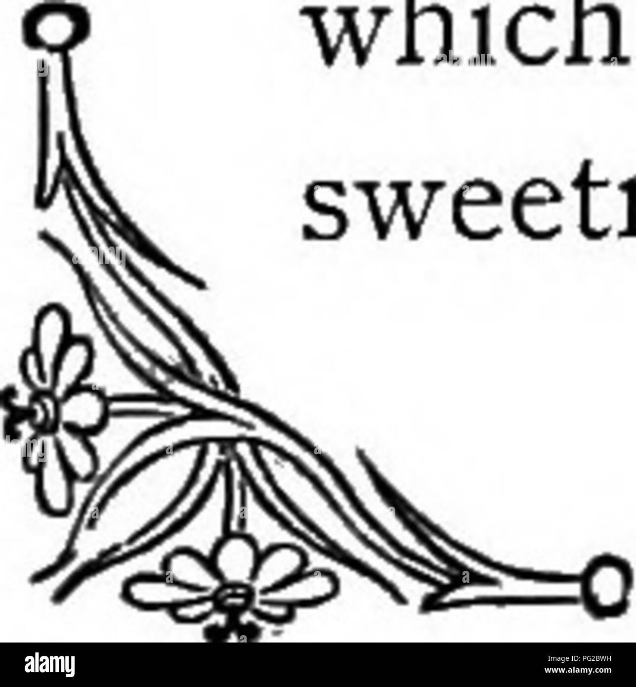 """. Le langage des fleurs: ou emblèmes floraux, de pensées, de sentiments, et les sentiments ... Langage des fleurs. Jasmin indien. de ruines, c'est l'ornement du vieux murs qui la soutiennent; il ne reçoit rien au-delà; mais, un ami constant, il meurt lorsqu'il accorde lui-même """" le lierre, que plus fidèle et ami, plus ferme qui accélère son succoring à prêter aux bras les ruines de fane, où dans la jeunesse il a vu, et ses vrilles pliant dans le sport ont été jetés. Lorsque le naufrage de fortifier et moisissent tower semblent seulement les spectres de l'ancien pouvoir, puis le lierre autour de clusters, le mur et la tapisserie pour accrocher Banque D'Images"""
