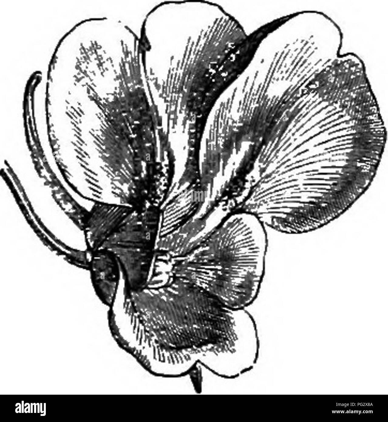 L Histoire Naturelle Des Plantes La Botanique Fig 41 Cote