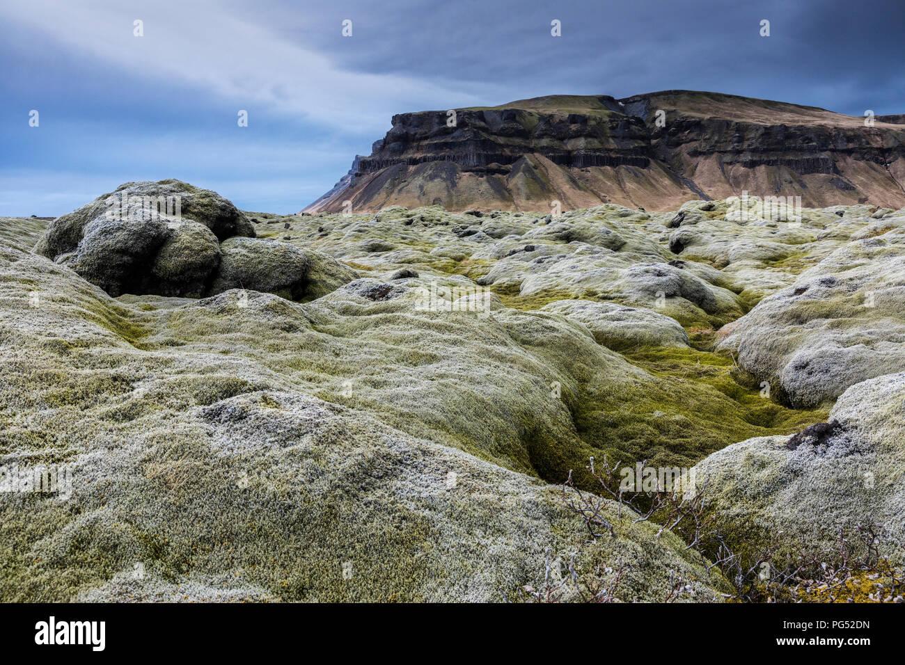 Le lichen d'Islande champ à jour nuageux Photo Stock