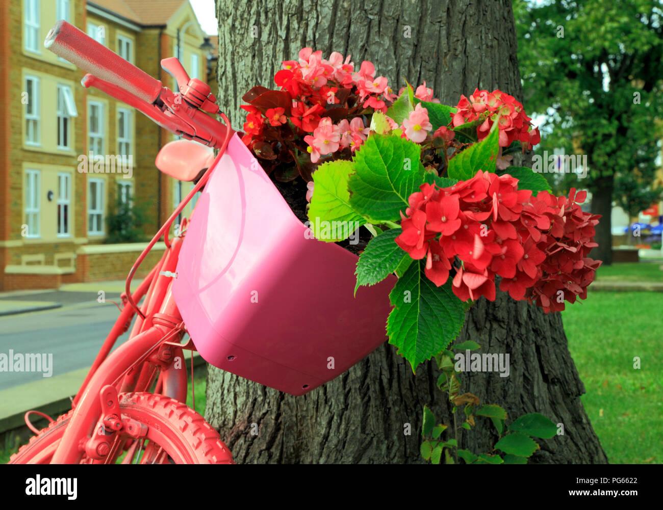 Hunstanton en fleurs, plantes inhabituelles, conteneurs de bicyclettes peints rose, rouge, rose, fleurs hortensias Photo Stock