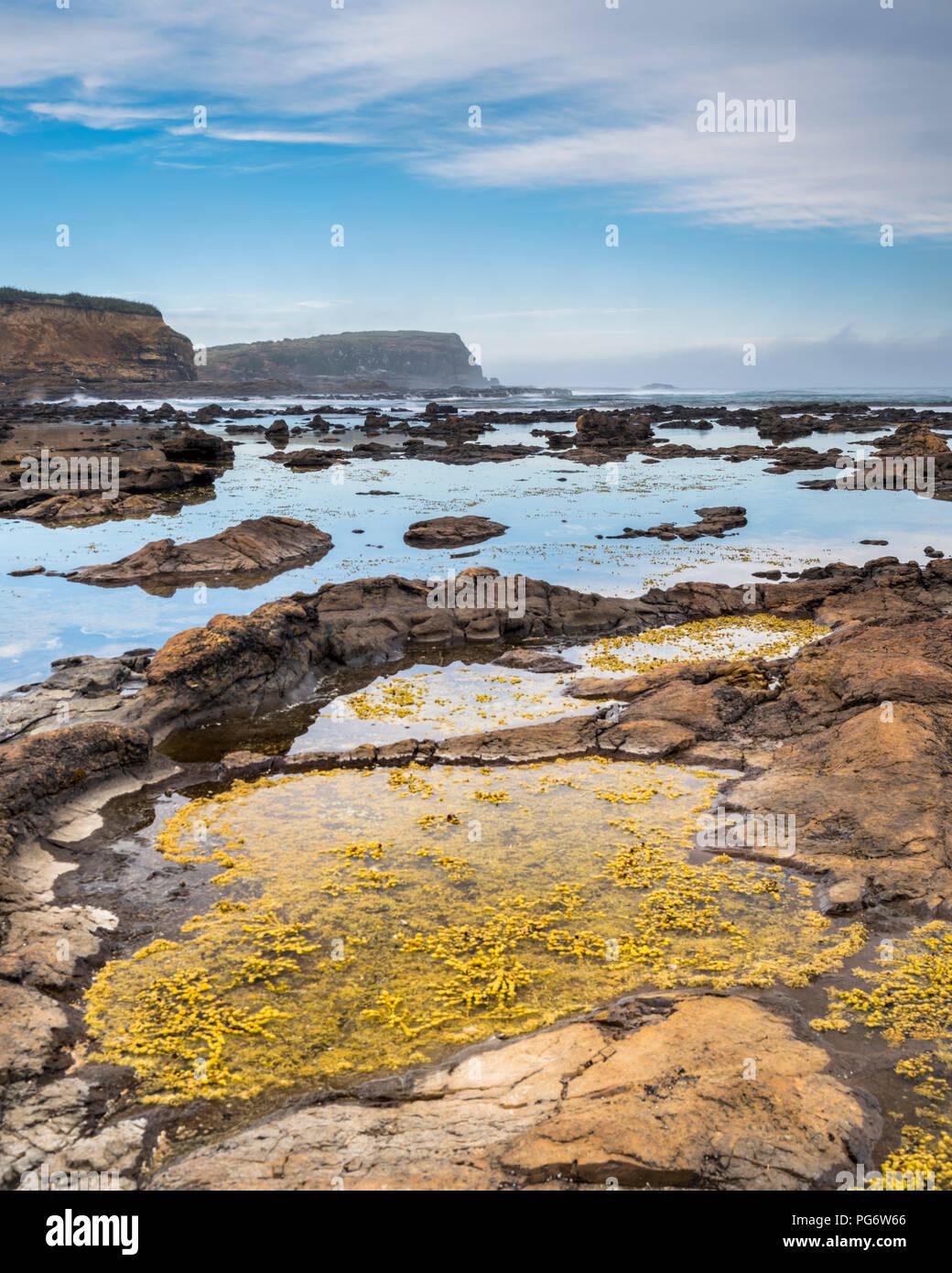 Nouvelle Zélande, île du Sud, le sud de l'itinéraire touristique, Orepuki, Curio Bay Photo Stock
