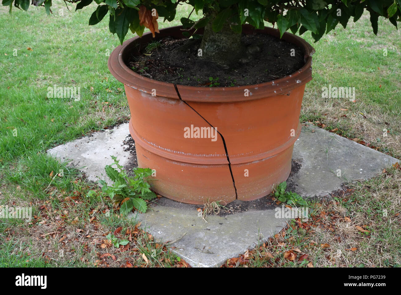 Tres Grand Pot De Fleur Exterieur broken terracotta pot photos & broken terracotta pot images