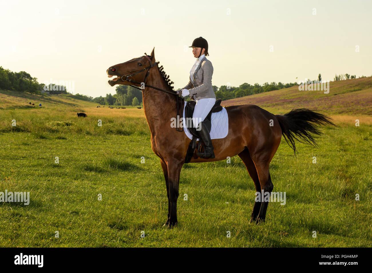 Jeune femme à cheval sur le champ vert. L'équitation. La concurrence. Hobby Photo Stock