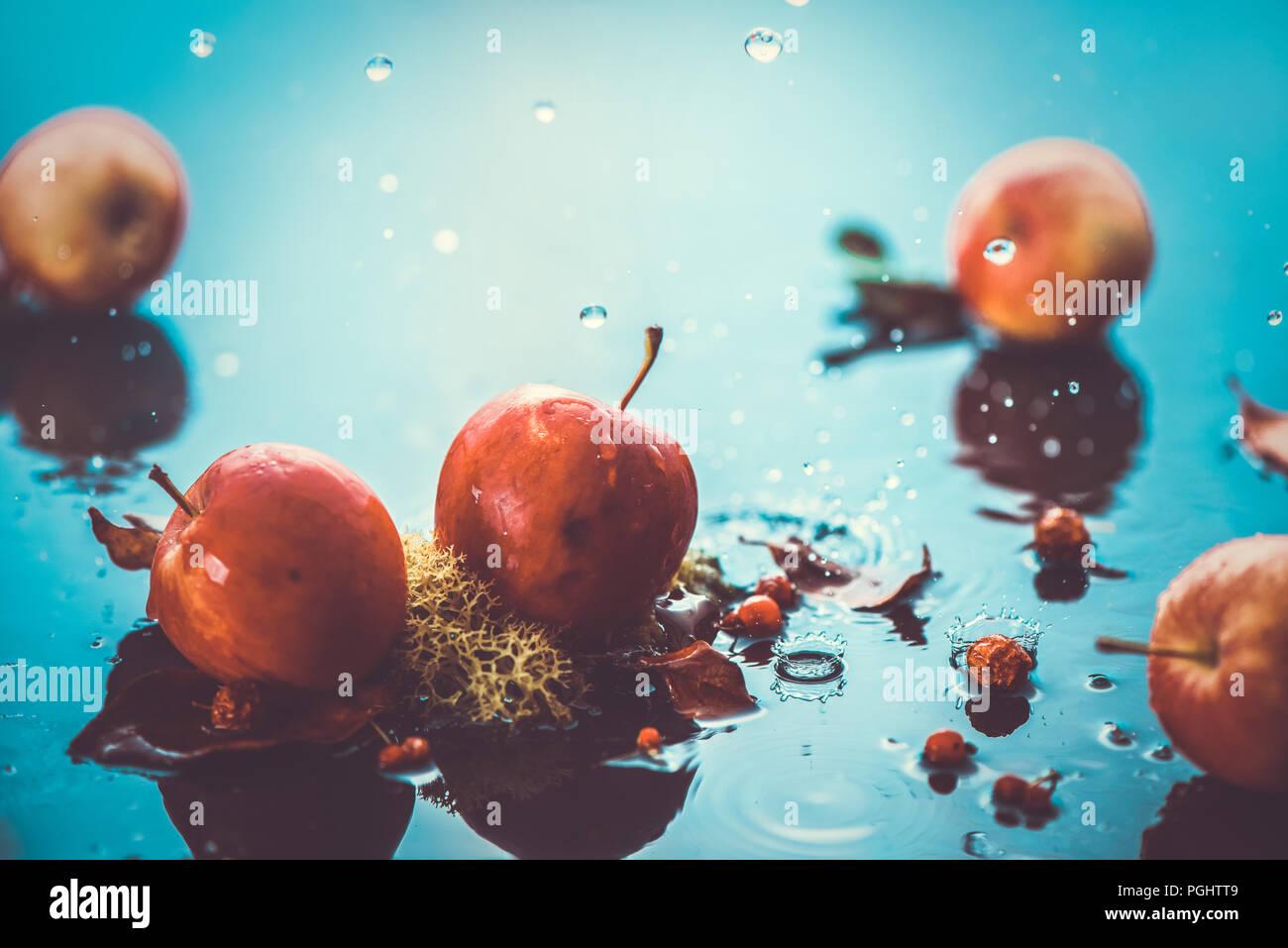 Les pommes d'automne sous la pluie encore la vie. En-tête de récolte d'automne avec de l'eau chute et copier l'espace. Les petites pommes rouges ranet et les feuilles tombées. L'effet de traitement croisé Photo Stock