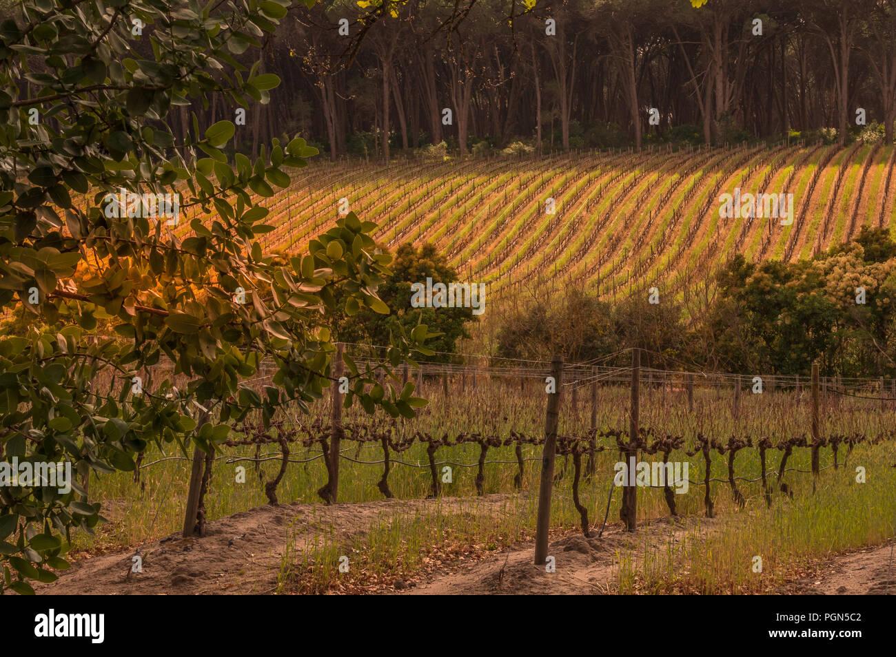 Un endroit calme au-dessus des vignes pour quelques temps moi Photo Stock