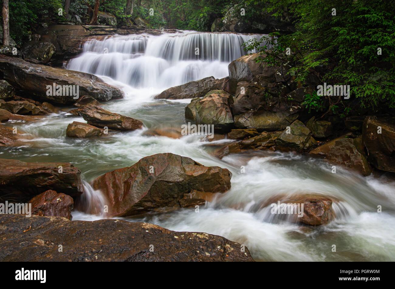 Cascades de Decker's Creek, un petit ruisseau de montagne coule sur de grosses pierres sous un auvent de rhododendron. Banque D'Images