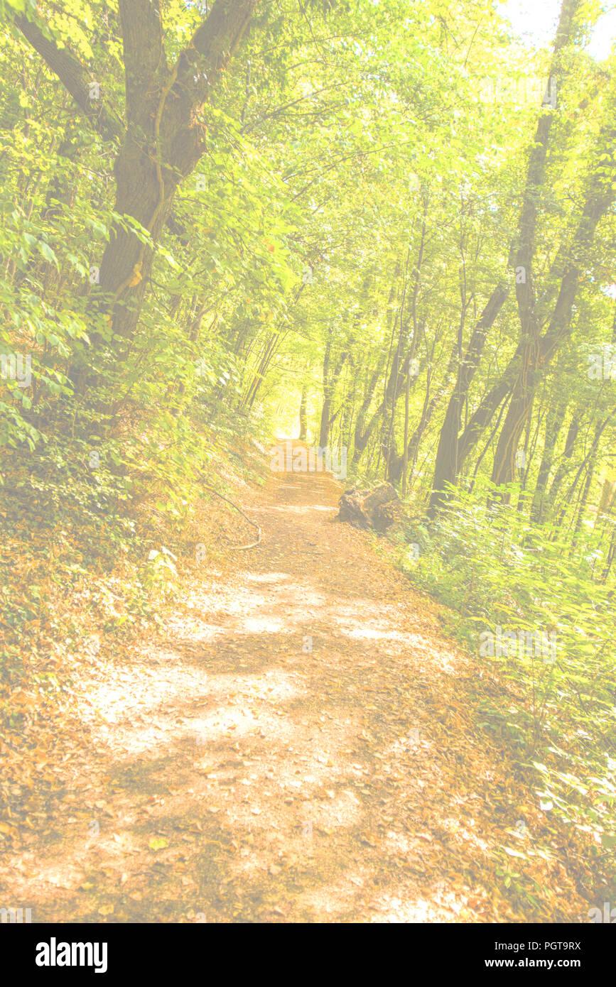 Forêt en automne avec chemin Photo Stock